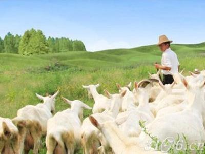 第6批奶粉注册名单公布 又2个国产羊奶粉获批